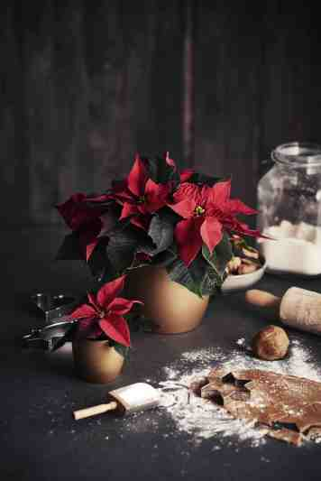 81820-BRAND_Plantasjen-PRICE_.-CUSTOMER_Plantajsen-COLOR_Red-PRODUCT_Pottery and Flowers-kopi