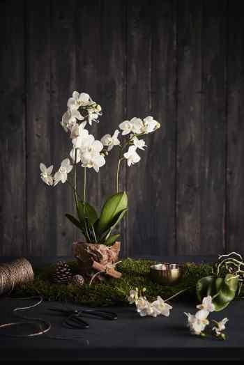 81823-BRAND_Plantasjen-PRICE_.-CUSTOMER_Plantajsen-COLOR_White-PRODUCT_Pottery and Flowers-kopi